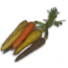 גזר צבעוני (מארז) - שוק פירות וירקות גיל עמל