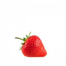 תות שדה תפזורת - הירקניה