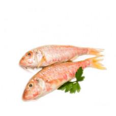 ברבוניה אדומה - זלאיט דגים