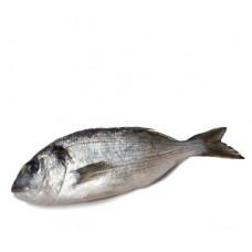 דניס - זלאיט דגים