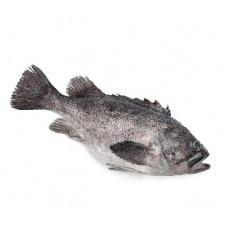 לוקוס - זלאיט דגים