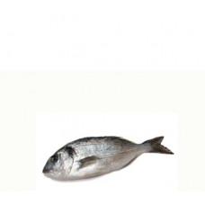 דניס בריכה - זלאיט דגים