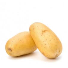 תפוא לבן תפזורת (תפוח אדמה) - הירקניה