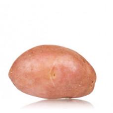 תפוא אדום תפזורת (תפוח אדמה) - הירקניה