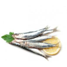 סרדינים (אם יש במלאי) - זלאיט דגים
